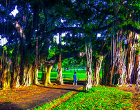 Queen Kapiolani Park in Hawaii. Waikiki Beach, , Oahu, Hawaii, USA - September 22, 2015: The largest and oldest park in Hawaii - Queen Kapiolani Regional Park stock photo