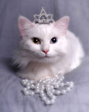 Queen Kitty. Cat sitting with crown and pearls