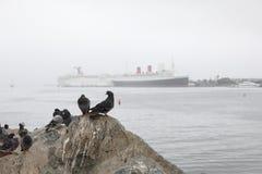 Queen Mary achter de vogel royalty-vrije stock afbeelding