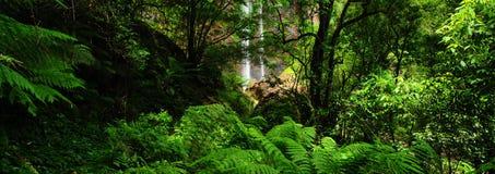 Queen Mary Falls of Queensland Stock Image