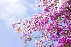 Queen's Flower Stock Photos