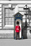 Queen`s Guard in Buckingham Palace - London. A Queen`s Guard standing outside Buckingham Palace in London. Guarding the official London residence of Queen royalty free stock image