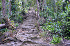The Queen`s Stairs at the Lost City, Colombia. The Queen`s Stairs at La Ciudad Perdida the Lost City in the Sierra Nevada, Colombia royalty free stock photos