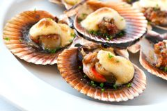 Queen scallop close up. Stock Images
