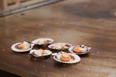 Queen scallops on the grill. Grilled queen scallops on the grill, typical food of Galicia, Spain Stock Photography
