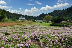 Queen Sirikit botany garden in Chiangmai city Thailand Stock Photos