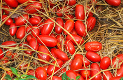 Queen tomato on the straw. In thailand Stock Photos