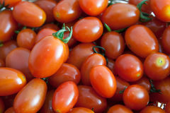 Queen tomatoes Stock Images