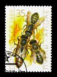 Queen and Workers (Apis mellifica) on Honeycomb, Beekeeping seri. MOSCOW, RUSSIA - NOVEMBER 26, 2017: A stamp printed in USSR (Russia) shows royalty free stock images