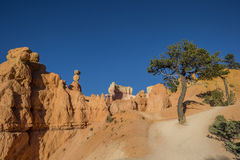Queens garden trail in Bryce Canyon Royalty Free Stock Photography