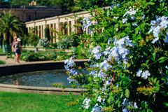 Queens garden. Traveling around Germany. Near palace stock photography