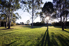 Queensland, Brisbane Park. Lawn and trees in the sun in the park stock image