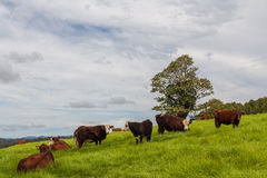 Queensland cattle ranch. Queensland, Australia cattle ranch local features Stock Image