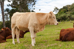 Queensland cattle ranch Royalty Free Stock Photo