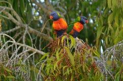 or Queensland de côte de l'australie Image stock