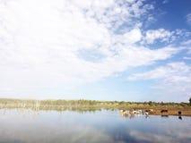 Queensland del norte, Australia Imagen de archivo libre de regalías