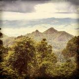 Queensland Rainforest Stock Photo