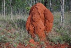 Queensland-Termitenhügel Lizenzfreie Stockfotos