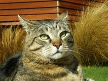 Queenstown Cat Stock Images