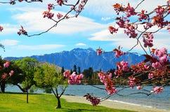 Queenstown Nuova Zelanda Fotografia Stock