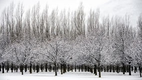 Queenstown winter snow Stock Photography