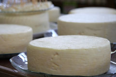 Queijo de Minas. Traditional cheese from the state of Minas Geras in Brazil stock photography