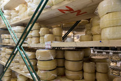Queijo do leite de vaca, armazenado no prateleiras de madeira e deixado para amadurecer a Imagem de Stock