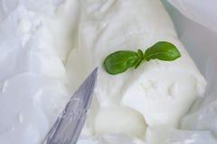 Queijo italiano - stracchino com folhas de Basileia closeup foto de stock royalty free
