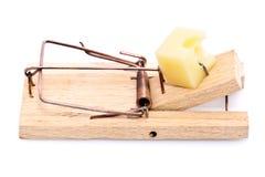 Queijo no mousetrap Fotos de Stock