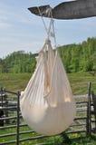 Queijo tradicional de secagem Foto de Stock Royalty Free
