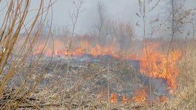 Queima a grama seca O fogo nos campos uma grande escala O fogo queima tudo vivo vídeos de arquivo