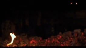 Queimadura de carvões do vidoeiro Carvões para a queimadura do alimento vídeos de arquivo