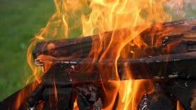 Queimadura de madeira do fogo em um mangal video estoque