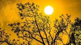 Queimadura de Sun imagem de stock