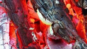 Queimadura do fogo da madeira e do carvão vídeos de arquivo