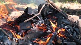 Queimadura na fogueira da floresta dos galhos secos video estoque