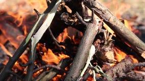 Queimadura na fogueira da floresta dos galhos secos vídeos de arquivo