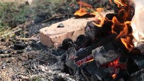 Queimadura na fogueira da floresta dos galhos secos filme