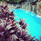 Queira mergulhar e nadar foto de stock royalty free