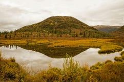 Queira saber reflexões da água do lago no parque nacional de Denali foto de stock royalty free