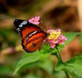 Quel la geometria su un fiore e su una farfalla fotografie stock