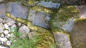Quelle des Quellwassers stock video footage