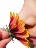 Quelle odeur? Images libres de droits