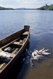 Quelle von weißer Nile River und von Nilbarsch, Uganda stockfotos
