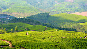 Quello con più giardini di tè Immagine Stock Libera da Diritti