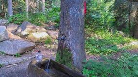 Quellwasser, das durch den lebendigen Baum nahe der Stadt von Borovets überschreitet Dritter Rahmen Bulgariens stockfoto