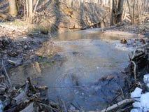 Quellwasser im Wald Stockfotografie