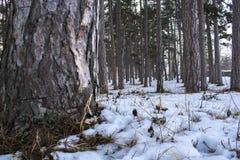 Quelque part dans les bois Photographie stock