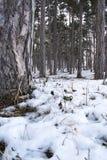Quelque part dans les bois Image libre de droits