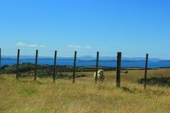 Quelque part en Nouvelle Zélande Photographie stock libre de droits